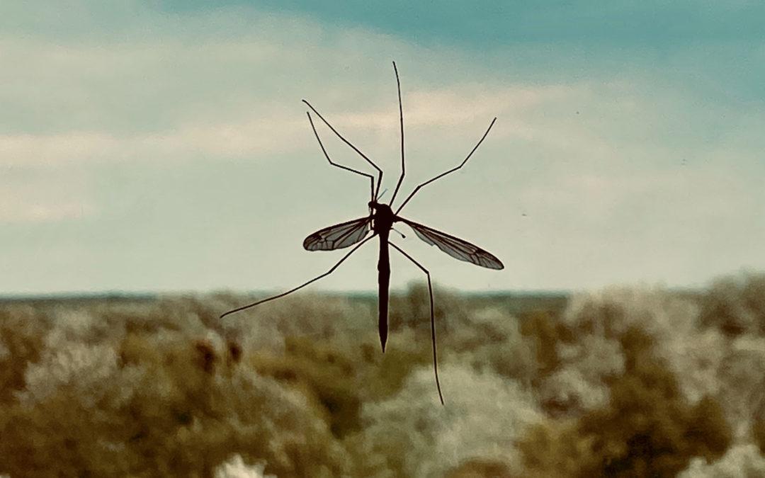 Quelles maladies sont transmises par les moustiques ?